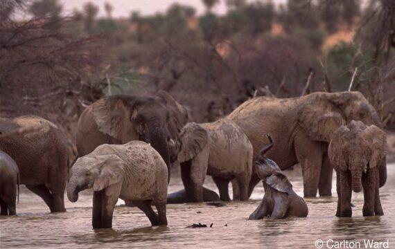 Mali-Elephants-1-063_800